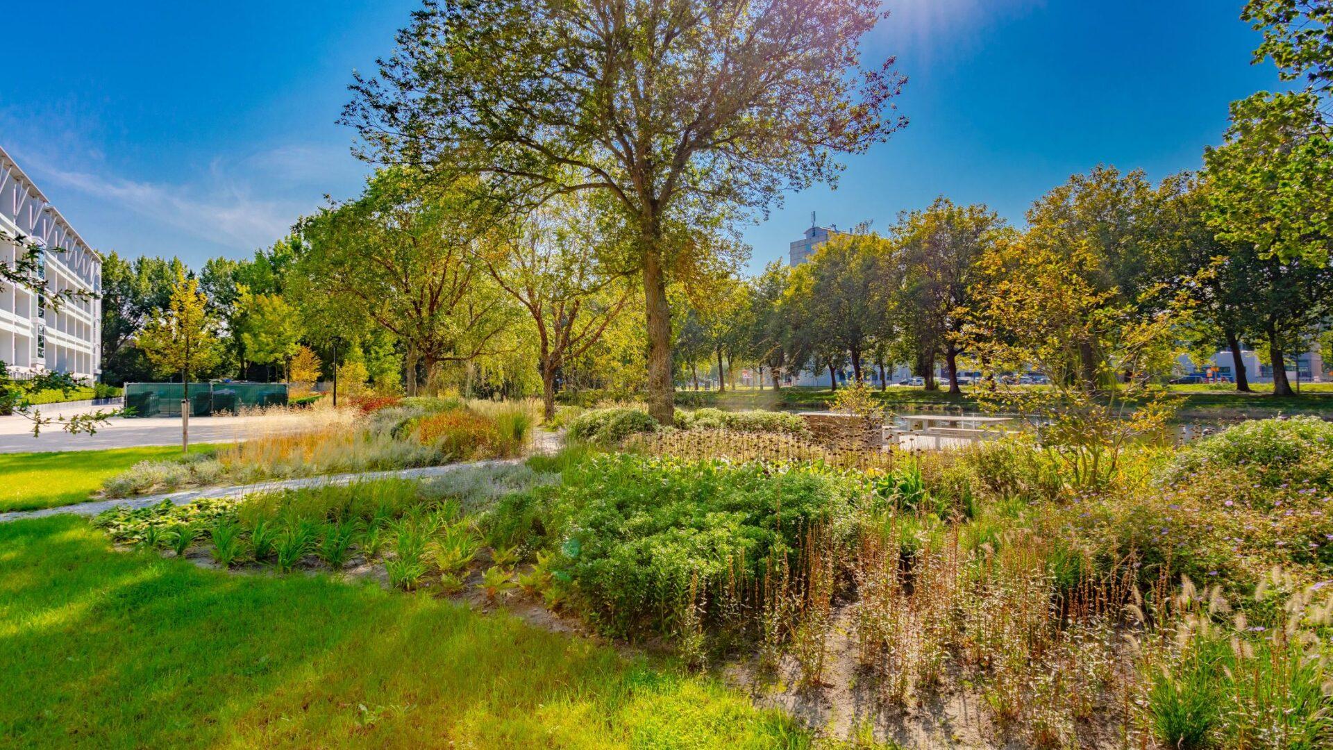 Ontwerp en aanleg park Delft beplanting boomverzorging